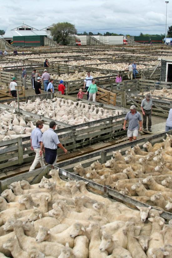 Saleyards stock