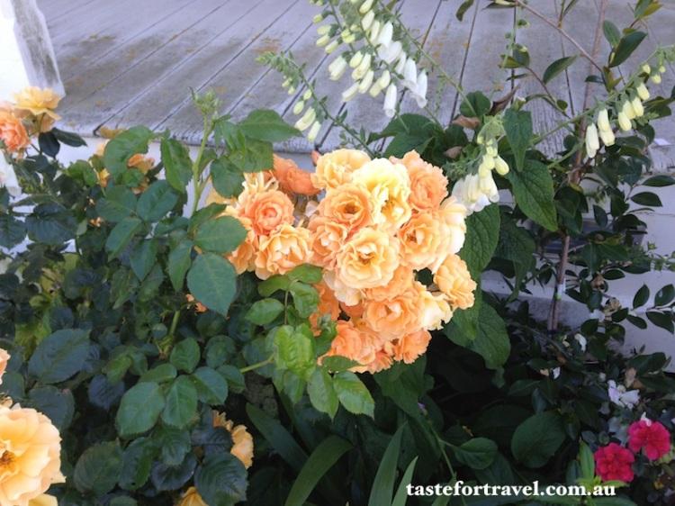 A New Zealand rose, Taste for Travel 4