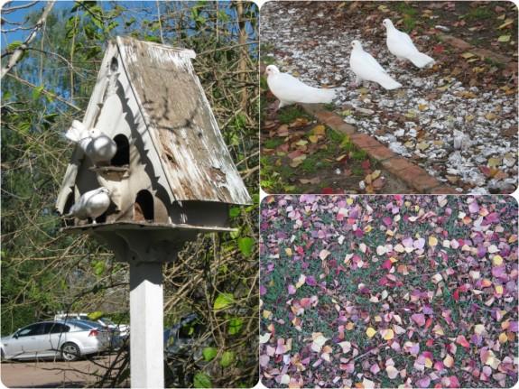 White doves make themselves at home on the restaurant's grounds