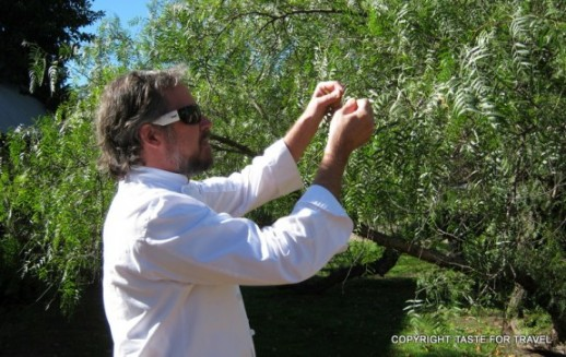 George picks leaves from a pepper tree outside the restaurant