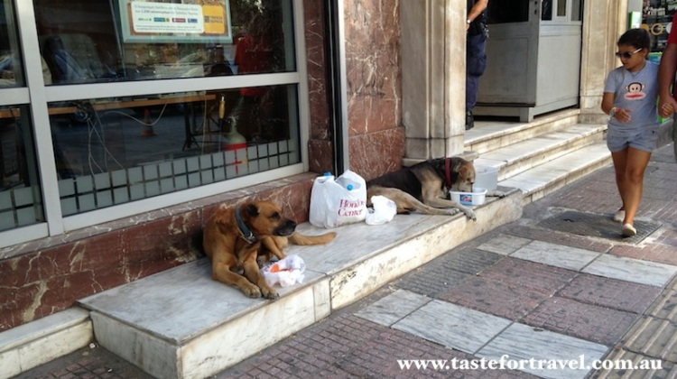 Street dogs in the port of Piraeus