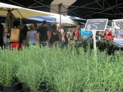 G and B Herbs at Orange Grove markets (2)