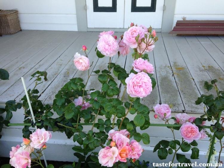 A New Zealand rose, Taste for Travel 6