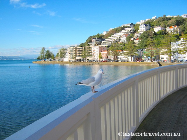 Oriental Bay, Wellington Harbour