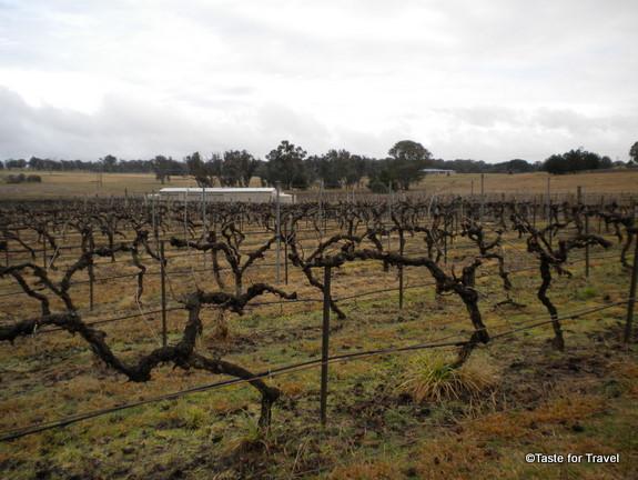 Clonakilla wines in Australia's shiraz region