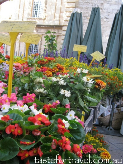 Flowers at Aix-en-Provence market