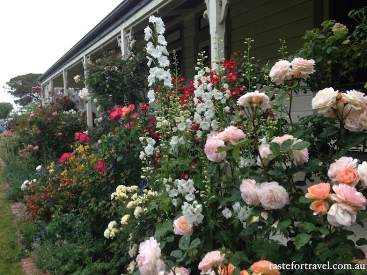 A New Zealand rose, Taste for Travel 5