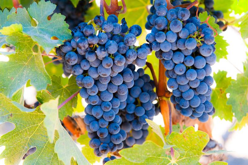 Margaret River Wines. Summer Harvest