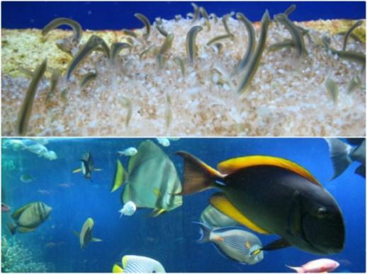 Sealife at the oceanographic Museum in Monaco