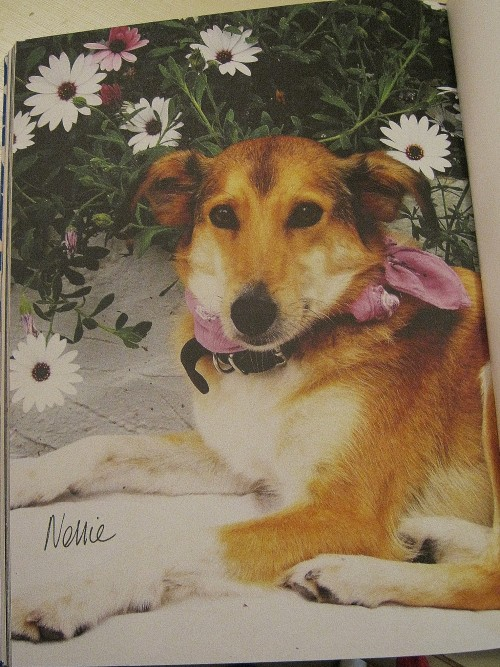 Claire's dog Nellie