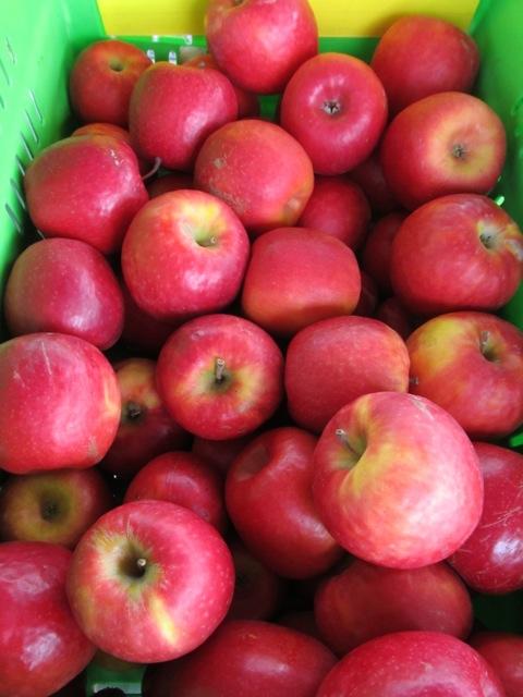NZ apples, Feilding Farmers Market